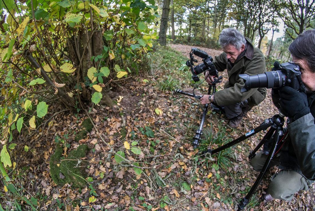 Fungi in Oakley Woods 5 © Dick Prior