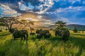 Elephant Family at Sunset © Mary Kirkby