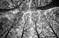 A Passion for Trees © Andrew Dow - HC